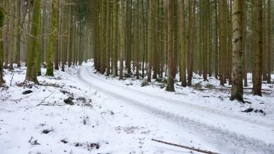 Mergenthauer Wäldern