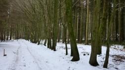 Mergenthauer Wälder