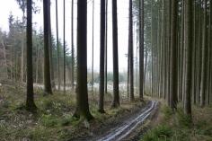 Rückeweg in den Mergenthauer Wäldern