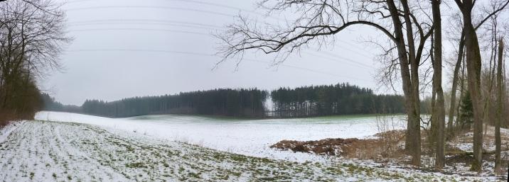 In den Mergenthauer Wäldern
