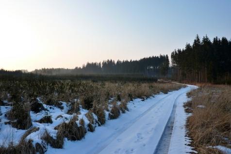Jungholz und Altwald wechseln sich ab