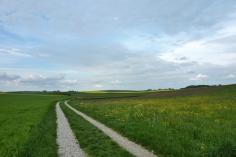 Intensivlandwirtschaftliches Gepräge des Meringer Hügellandes