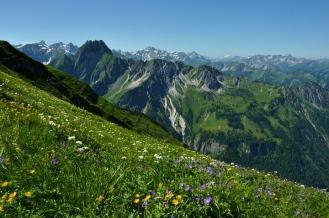 Dafür ist das Allgäu bekannt: Blumenwiesen