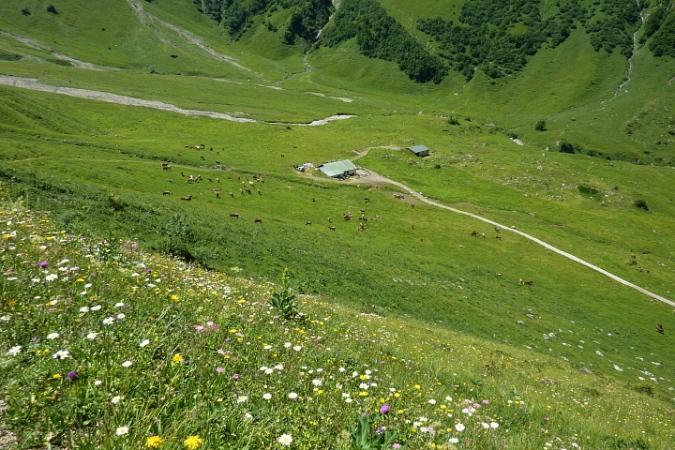 Käser-Alpe und Weidevieh
