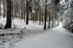 Hartwald bei Baierberg