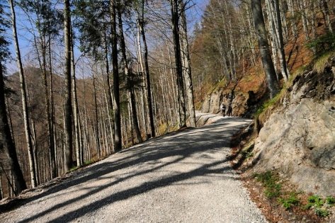 Warmer Laubmischwald zum Start der Tour