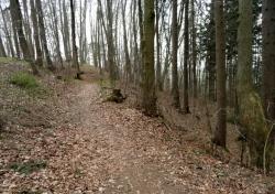 Trail am Loderberg