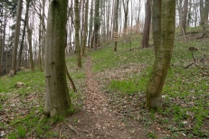 Trail am Loderberg bei Tädertingen