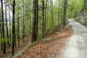 Laubmischwald am Herzogstand Reitweg