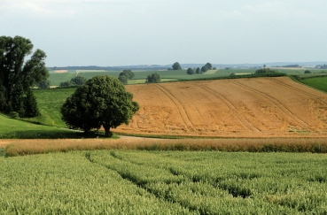 Tertiäres Hügelland bei Kissing: Blick Richtung Mering