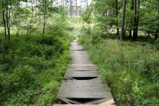 Holzbohlenweg bei der Schwefelquelle