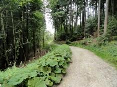 Waldweg bei Hammel