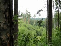 Schönes Mischwaldgelände