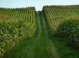 21km um Mering und Kissing: Maisgassen im Wittelsbacher Land