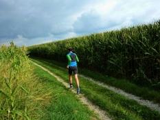 16km durch den Meringer Hartwald: Durch Maisgassen Richtung Reifersbrunn