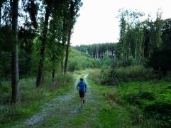 16km durch den Meringer Hartwald: im Hartwald
