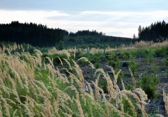 16km durch den Meringer Hartwald: Hartwald