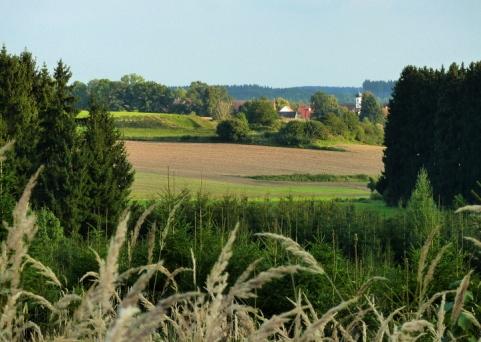 16km durch den Meringer Hartwald: Blick Richtung Hochdorf
