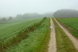 Triste Wetterstimmung unweit des Bonholzes