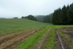 Rutschiger Abstieg am Waldrand des Bonholzes