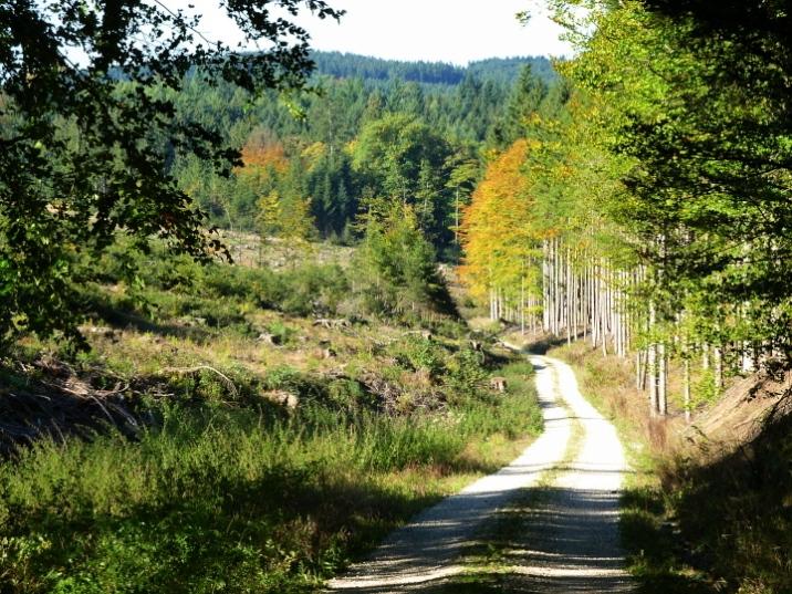 Abstieg ins Lauterbachtal