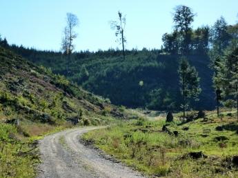 Zerfurchte Landschaft in den Westlichen Wäldern