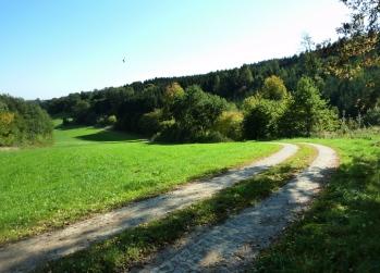 Am Waldrand des Holzarawaldes