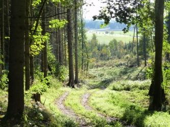 Abstieg von einem Hügel in den Westlichen Wäldern ins Wertachtal