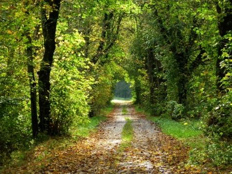 Herbstwald im Naturpark Augsburg