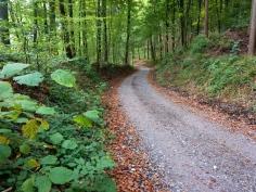 Hügel-Abstieg im Naturpark Westliche Wälder