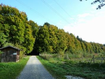 Laubwald im Naturpark Augburg