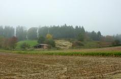 Die Böden sind hier lehmig oder sandig, typisch für das tertiäre Friedberger Hügelland