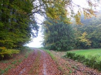 Der Herbst ist nun entgültig eingezogen