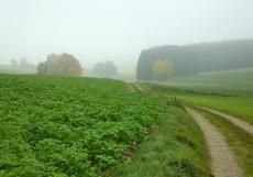Das Wittelsbacher Land liegt heute unter einer Hochnebeldecke