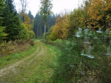 Herbstliche Atmosphäre im Landmannsdorfer Forst