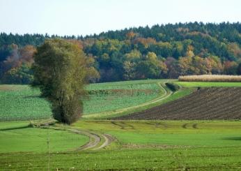 Heilachwald