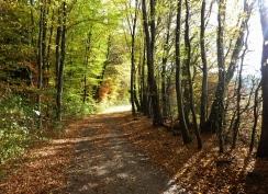 Waldrand des Heilachwalds