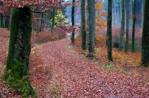 Laubbedeckter Weg