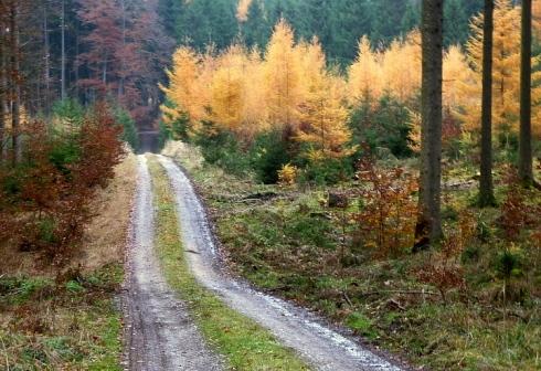 Herbst im Naturpark Augsburg