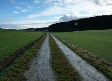 Am Rand des Landmannsdorfer Forsts geht es durch grüne Wiesen