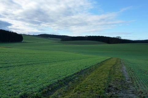 Rutschiger Wiesenweg unweit des Landmannsdorfer Forstes