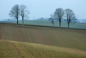 Grün ist auf den Felder nur in den ersten Zügen erkennbar