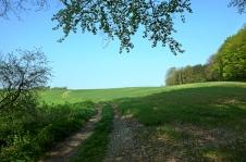 Waldrand am Heilach