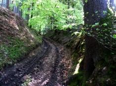 Hohlweg am Eurasburger Forst