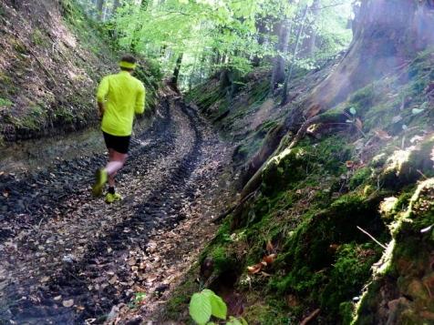 Anstieg im Eurasburger Forst