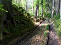 Im Eurasburger Forst