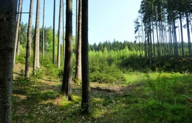 Eurasburger Forst