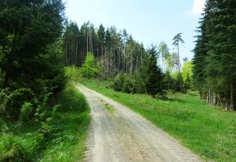 Anstieg vom Bonholz ins Erlauholz