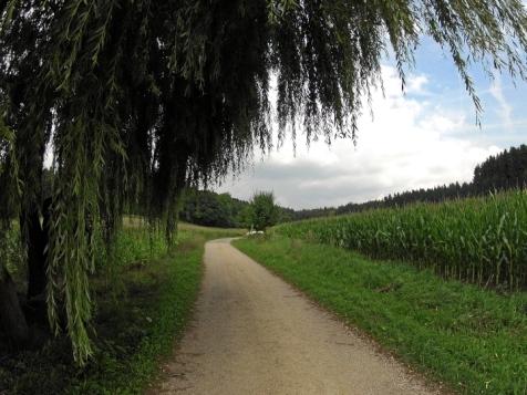 Landmannsdorfer Forst