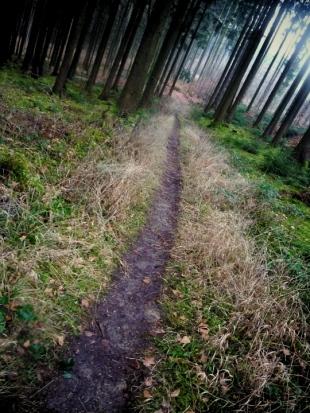 Singletrail Naturpark Westliche Wälder